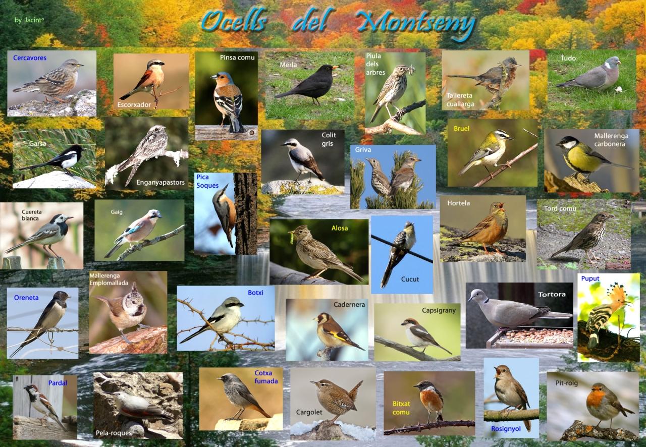 · Els ocells en el Parc Natural delMontseny