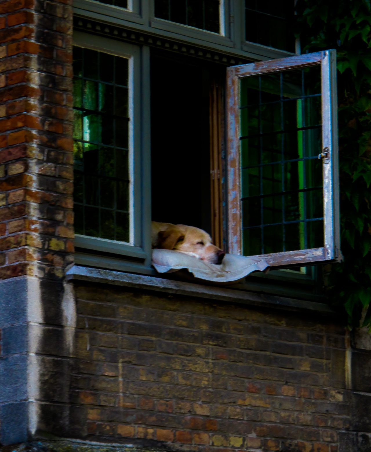 · Siesta canina en los canales deBrujas