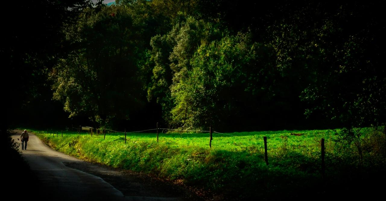 · El paseo de lamañana