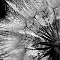 """Una encantadora y humilde """"mala hierba"""""""