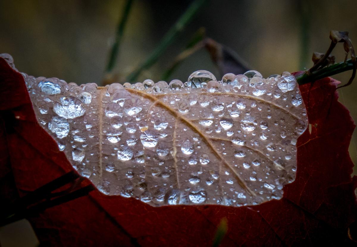Hoja con gotas de lluvia