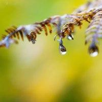 Primeras lluvias otoñales