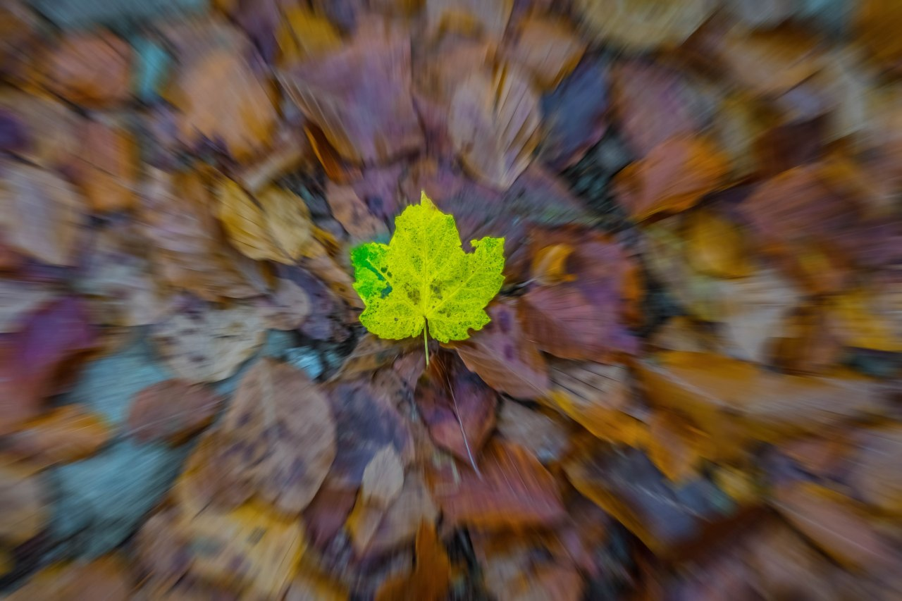 Falling of Autumn leaf