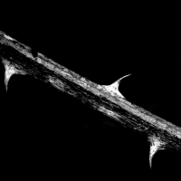 Tres espinas