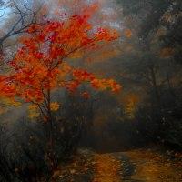 🍄 Herbst 🍄