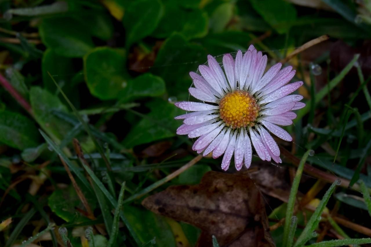 Un invierno primaveral