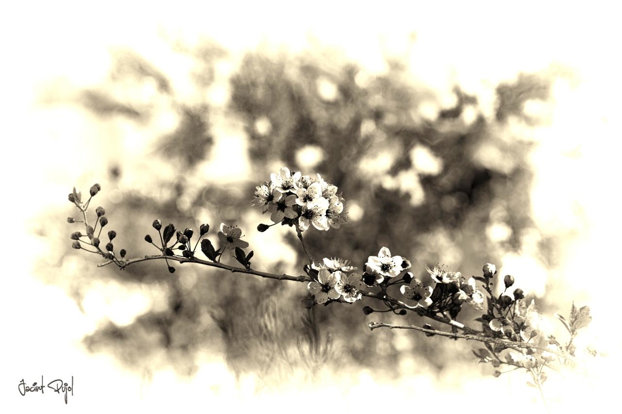 Primavera en luto