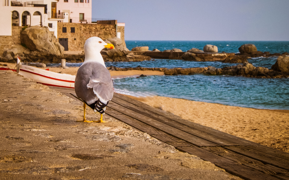 Costa Brava, Mediterráneo en estadopuro