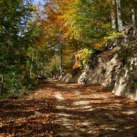 Ruta circular por los hayedos del Montseny