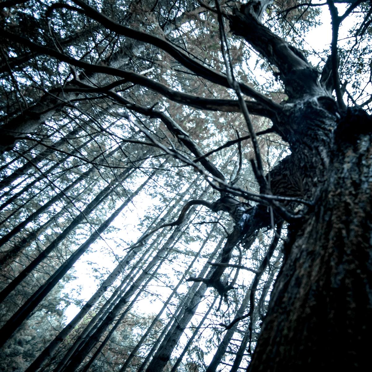 El bosque, a veces encantador ymisterioso