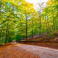 Turó de Maçaners, coronando un encantador bosque de hayas