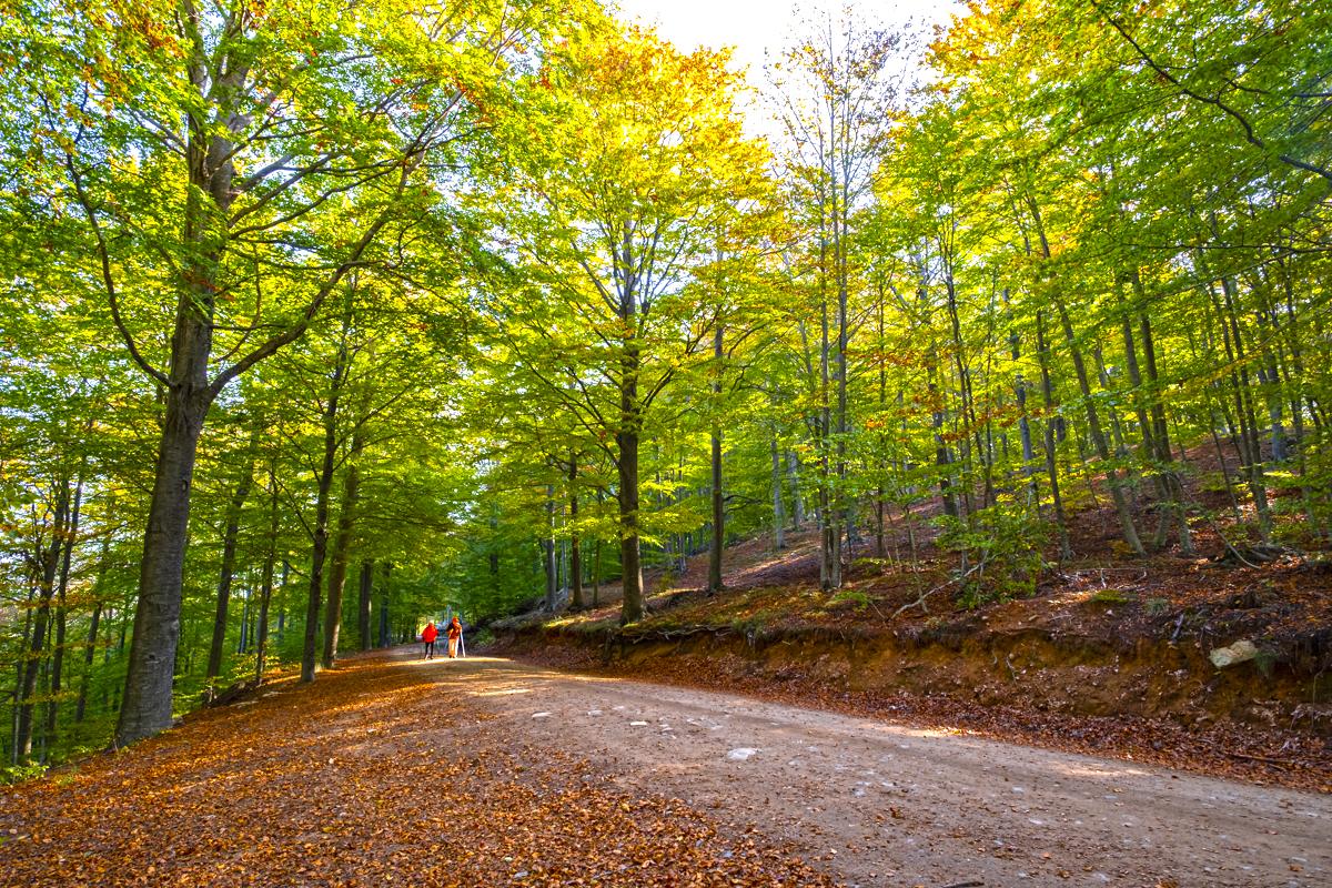 Turó de Maçaners, coronando un encantador bosque dehayas