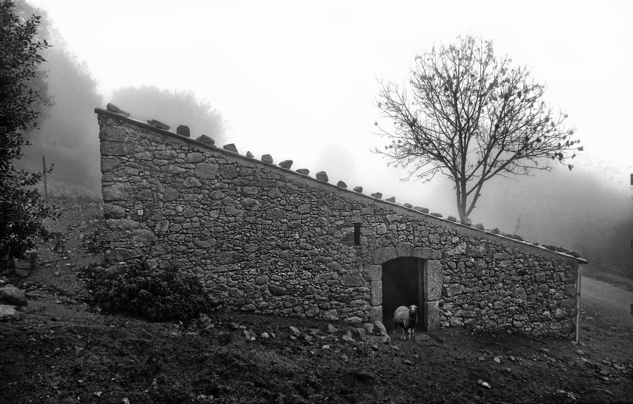 Corral de ovejas