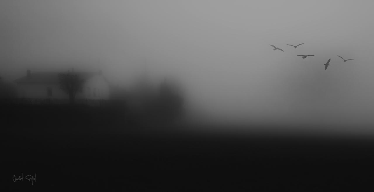 Entre la niebla alanochecer